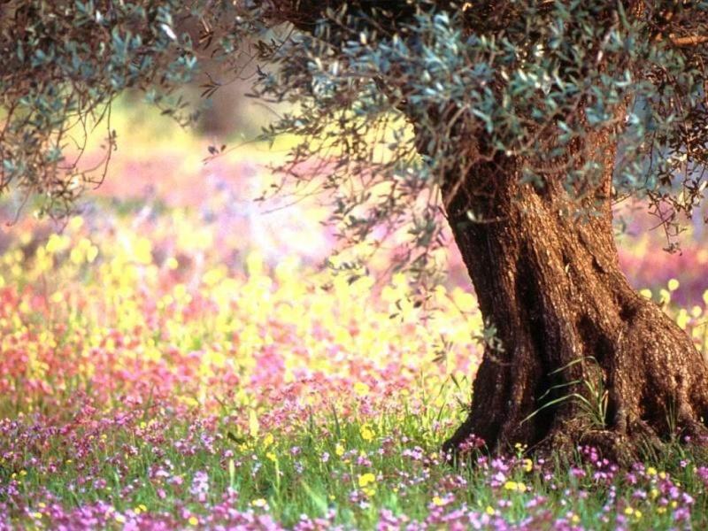faites sauter les obstacles entre Dieu et vous!... Fleur_10