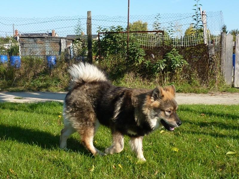 le plus beau chien du monde, nouvelles photos!!! P1050910