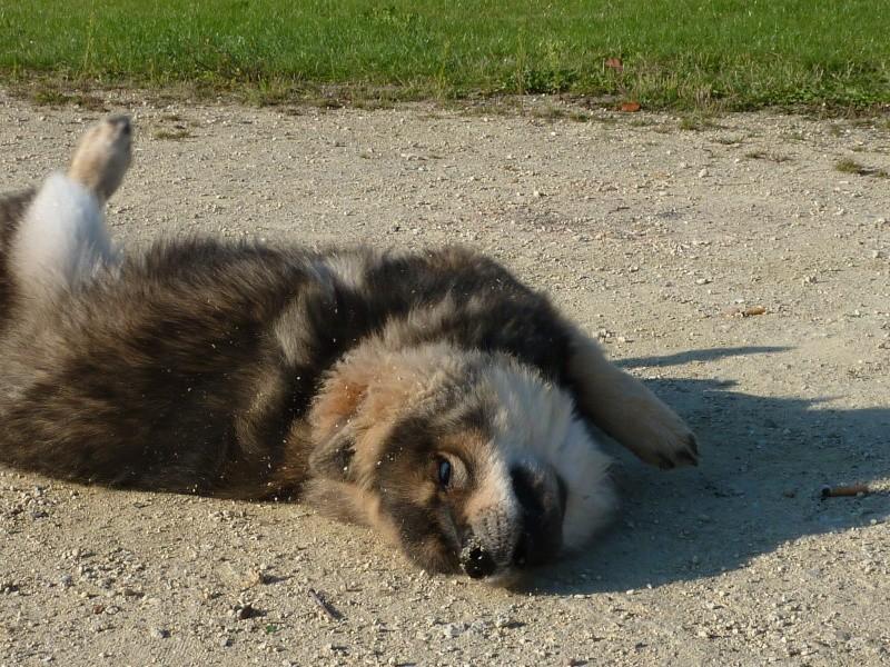 le plus beau chien du monde, nouvelles photos!!! P1050911