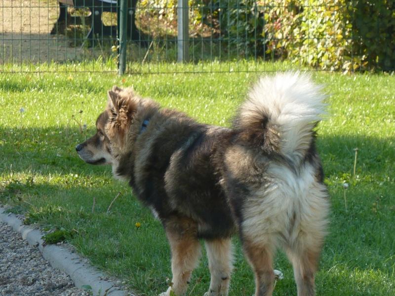 le plus beau chien du monde, nouvelles photos!!! P1050912