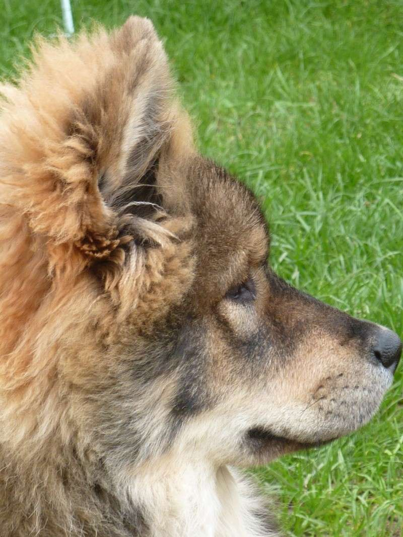 le plus beau chien du monde, nouvelles photos!!! P1050913