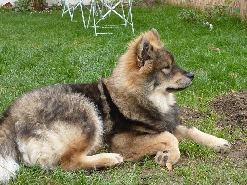 le plus beau chien du monde, nouvelles photos!!! P1050914