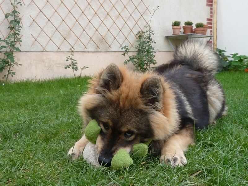 le plus beau chien du monde, nouvelles photos!!! P1050915