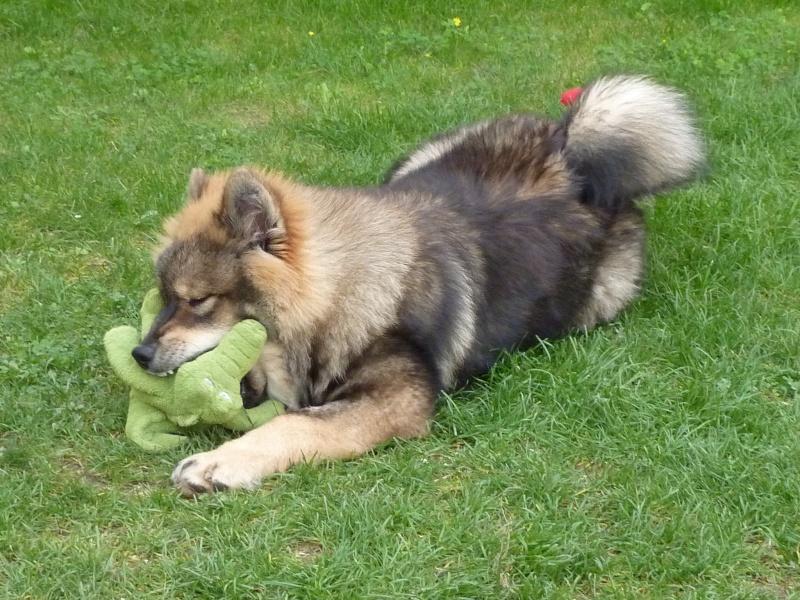 le plus beau chien du monde, nouvelles photos!!! P1050916