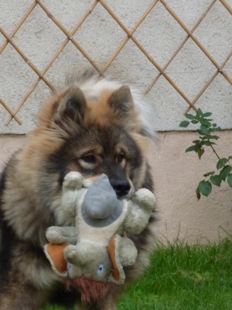 le plus beau chien du monde, nouvelles photos!!! P1050917