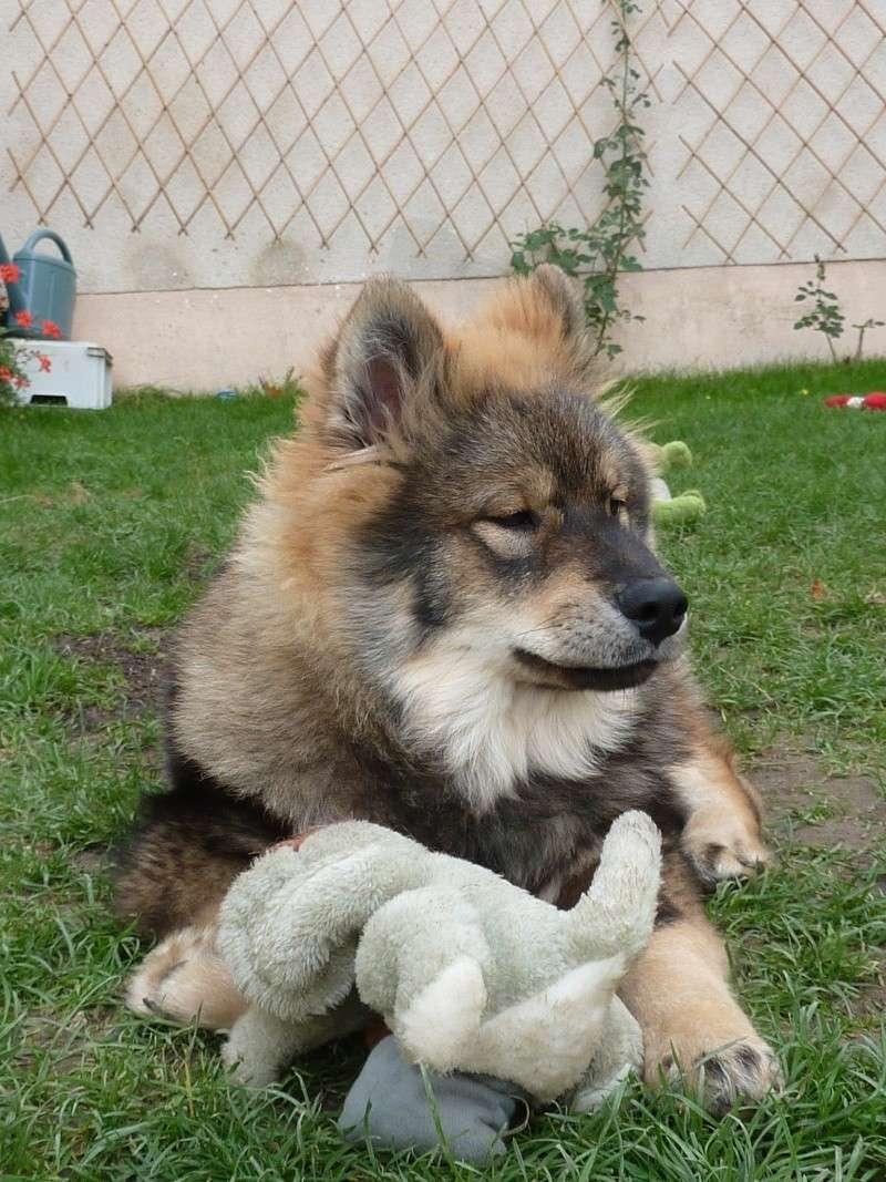 le plus beau chien du monde, nouvelles photos!!! P1050918
