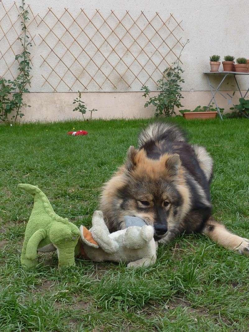 le plus beau chien du monde, nouvelles photos!!! P1060012