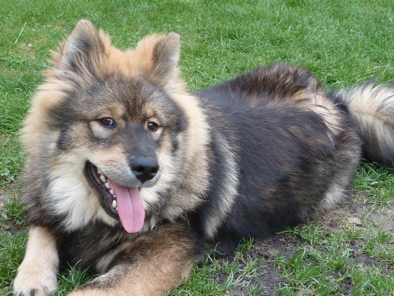 le plus beau chien du monde, nouvelles photos!!! P1060013