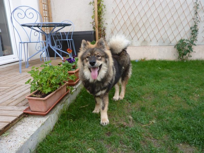 le plus beau chien du monde, nouvelles photos!!! P1060014