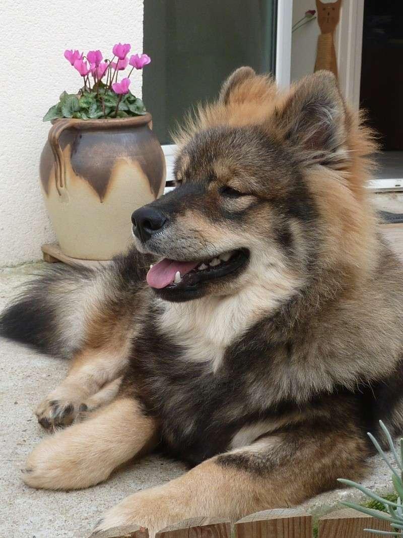 le plus beau chien du monde, nouvelles photos!!! P1060017