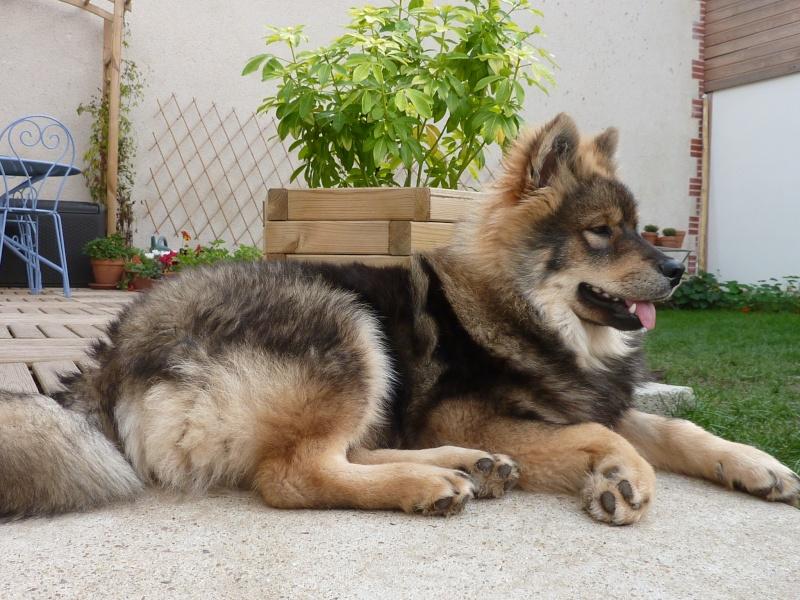 le plus beau chien du monde, nouvelles photos!!! P1060020