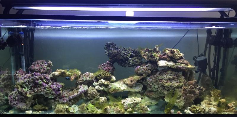 L'eau de mer... enfin j'y suis... Img_5911