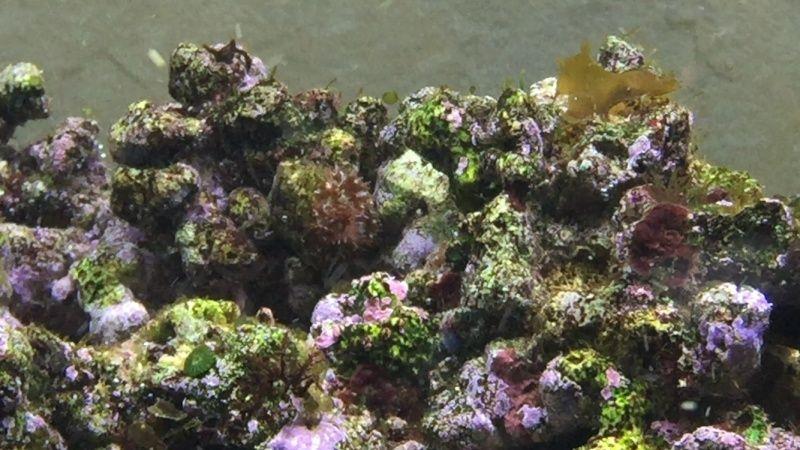 L'eau de mer... enfin j'y suis... Img_5913