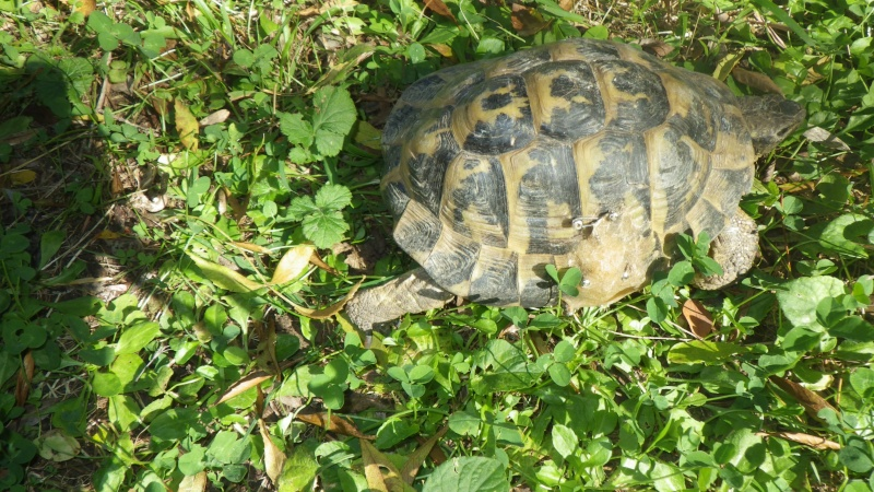 tortue accidentée Andre_12