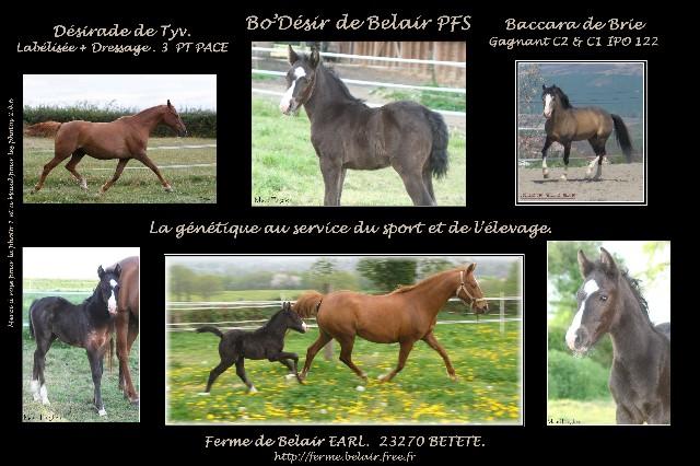 Bo'Désir de Belair . nouvelles photos à 2 mois p6 & 7 - Page 4 Bo_das11