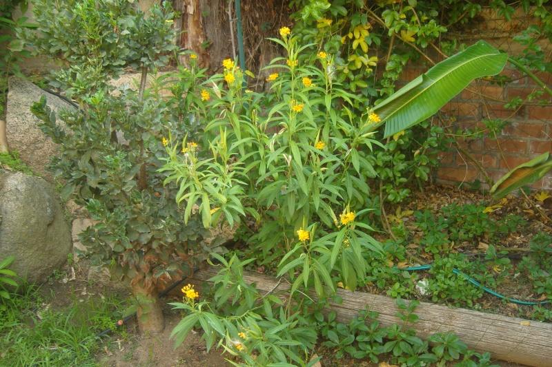 quelques floraisons de fin d'été Snv81911