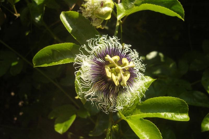 quelques floraisons de fin d'été Snv81912