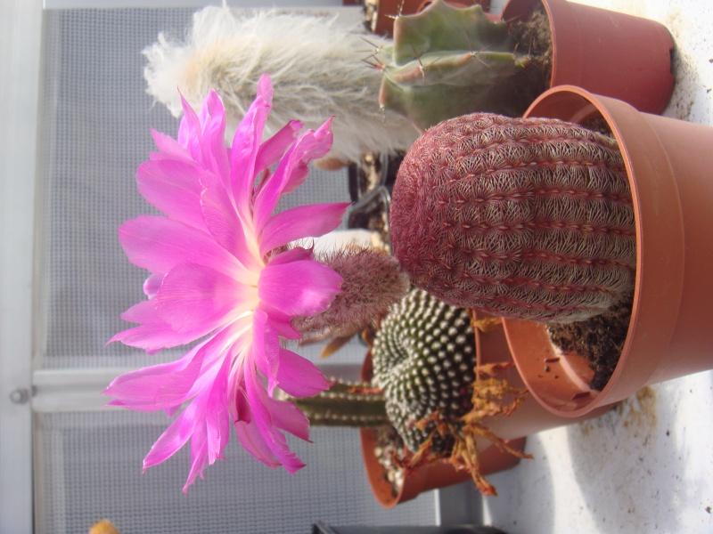Première fleur pour 2011 :D MAJ 16/06/2011 - Page 2 Dsc00637