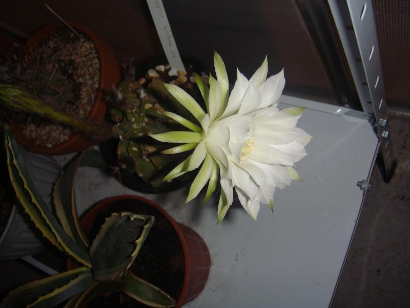 Première fleur pour 2011 :D MAJ 16/06/2011 - Page 2 Dsc00712
