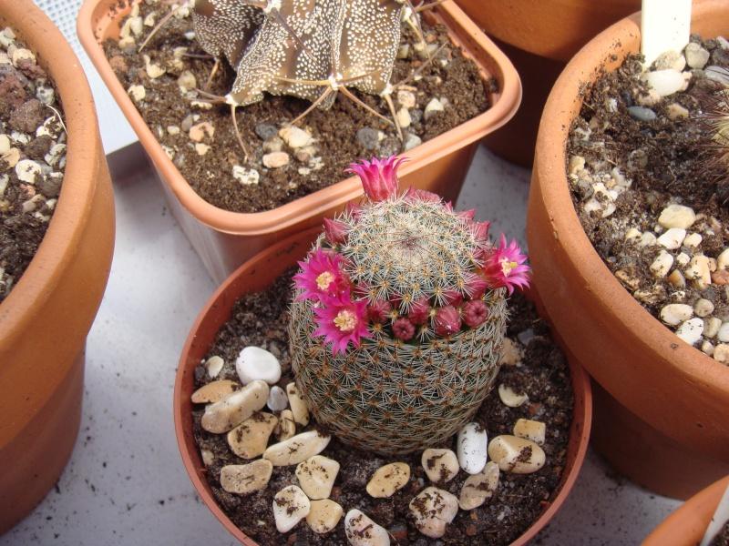 Première fleur pour 2011 :D MAJ 16/06/2011 - Page 2 Dsc00720