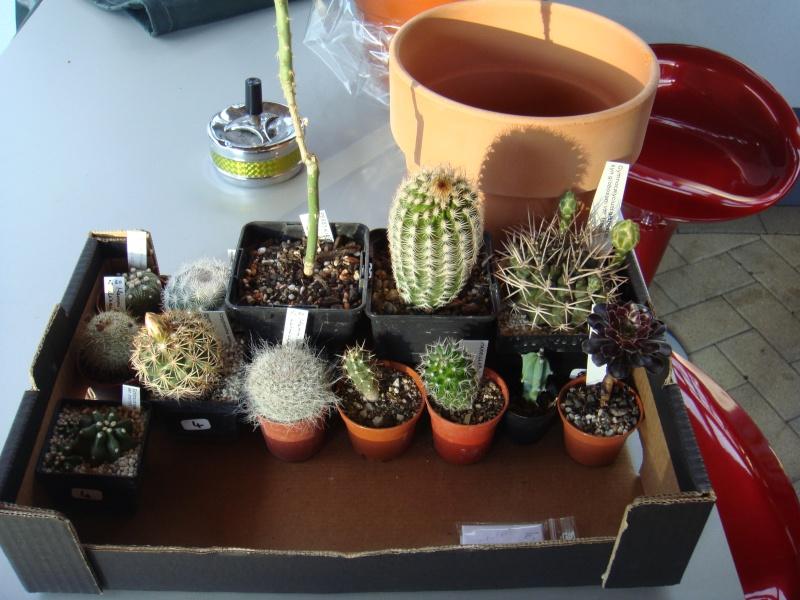 Saint-Hip aux Cactus Dsc00724