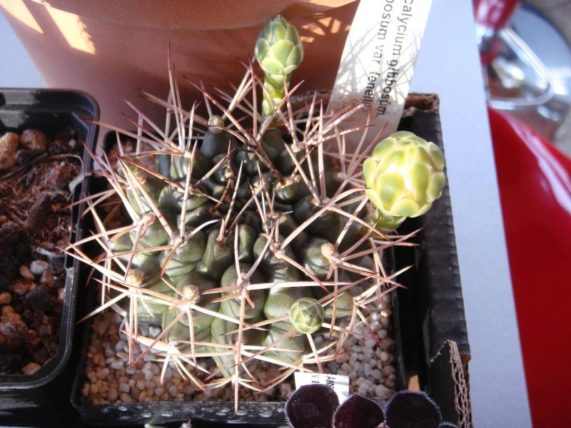 Saint-Hip aux Cactus Dsc00725