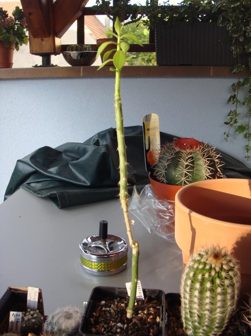Saint-Hip aux Cactus Dsc00727