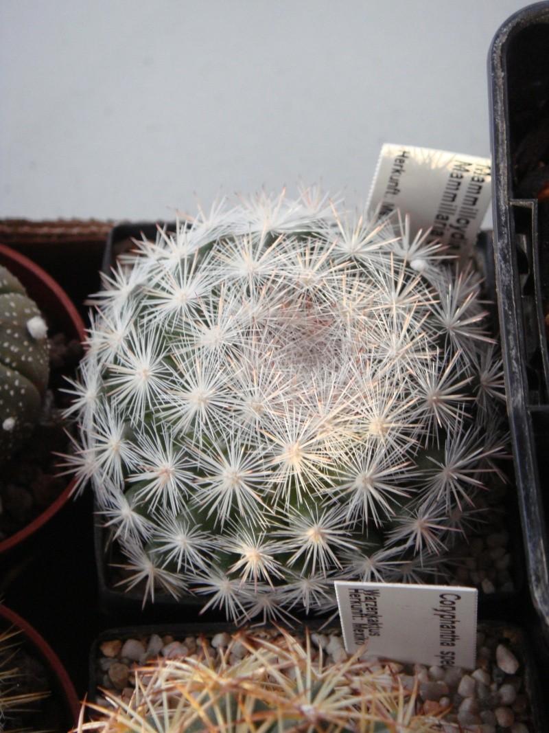 Saint-Hip aux Cactus Dsc00728