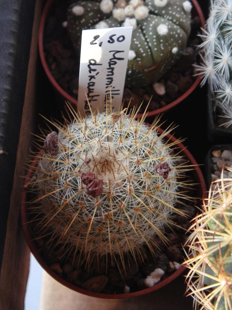 Saint-Hip aux Cactus Dsc00730