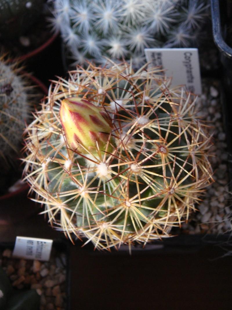 Saint-Hip aux Cactus Dsc00731