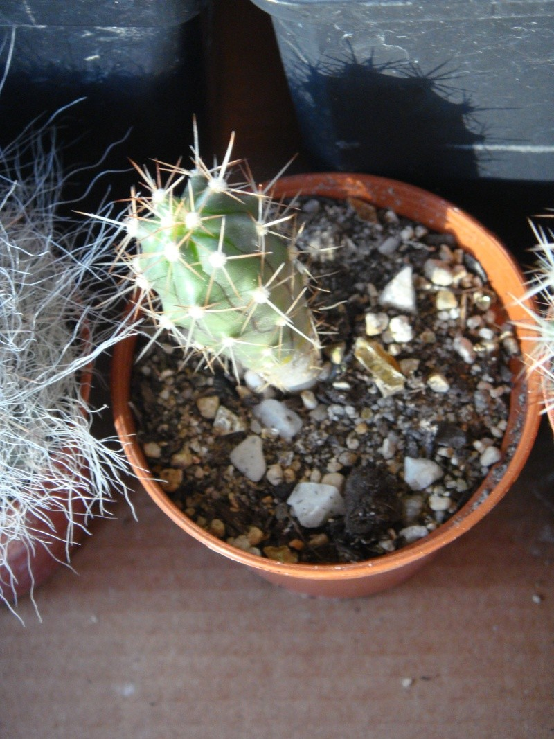 Saint-Hip aux Cactus Dsc00733