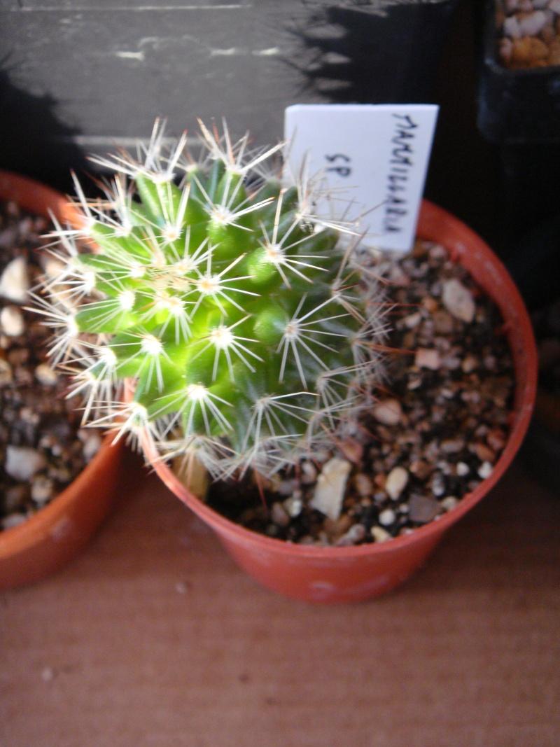 Saint-Hip aux Cactus Dsc00734