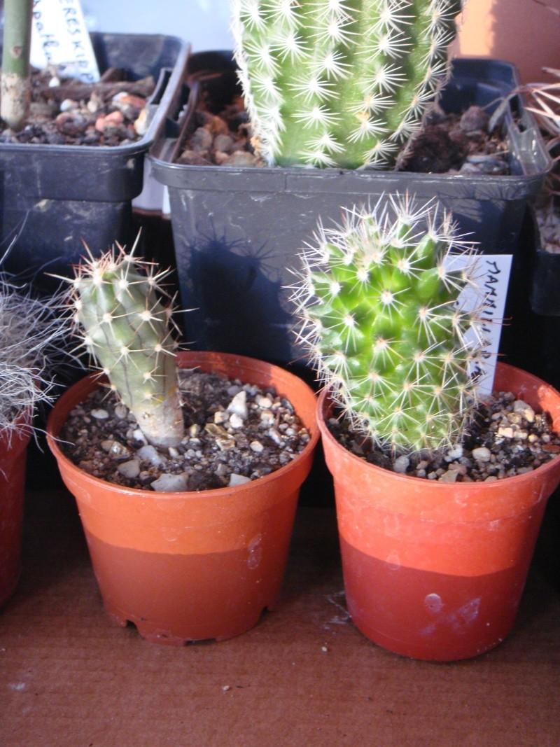 Saint-Hip aux Cactus Dsc00735