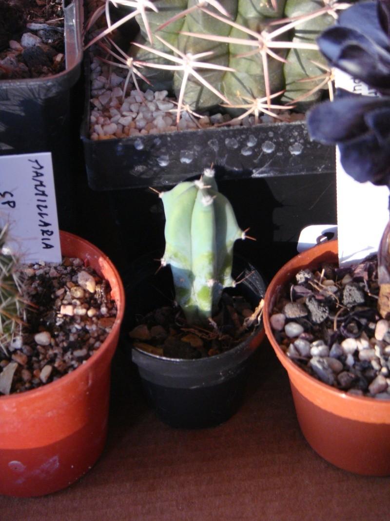 Saint-Hip aux Cactus Dsc00736