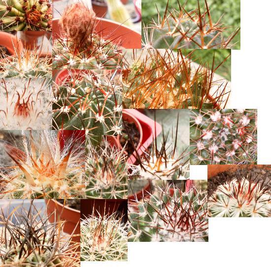 Pourquoi j'aime les cactus ? Apines10