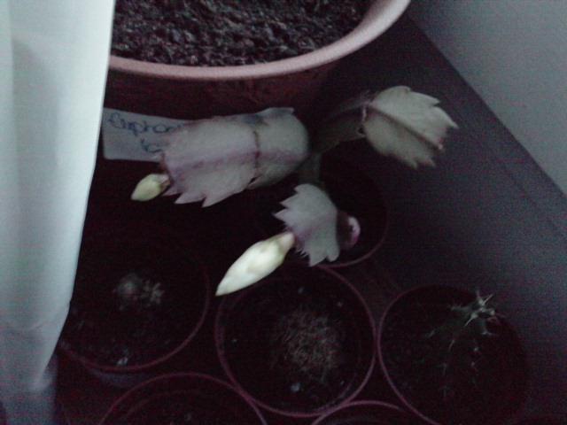Un post sur les dernières fleurs + (Surprise :D ) P2510113