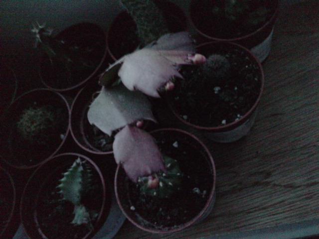 Un post sur les dernières fleurs + (Surprise :D ) P2510114