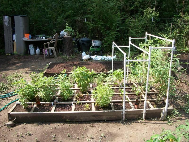 Tomato trellis for indeterminate tomato 102_0910