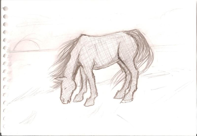 alors c'st vraiment crayonné... (cheval broutant) [noony4] Numari13