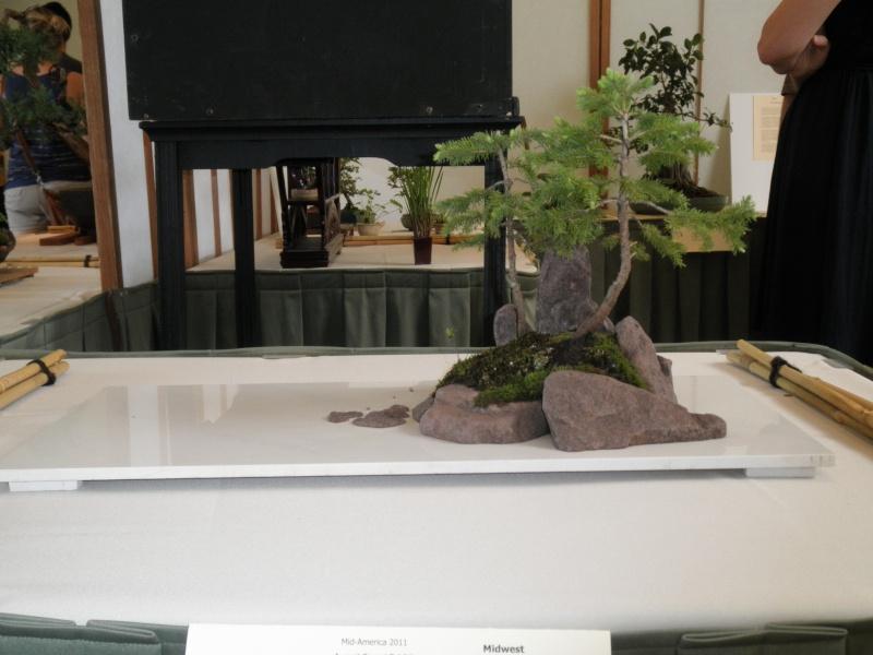 Midwest Bonsai Show 2011 P5220014