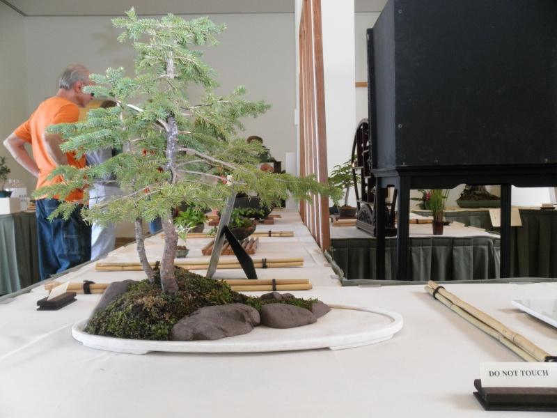 Midwest Bonsai Show 2011 P5220015