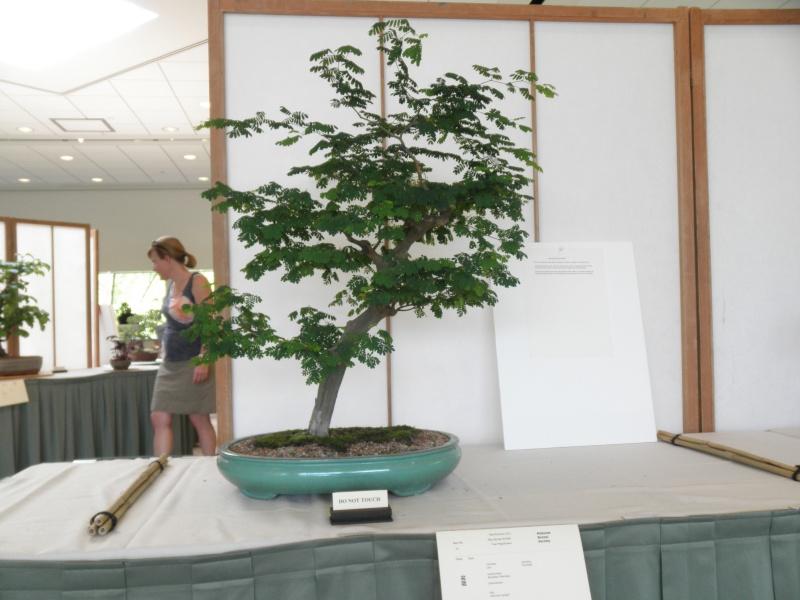 Midwest Bonsai Show 2011 P5220016