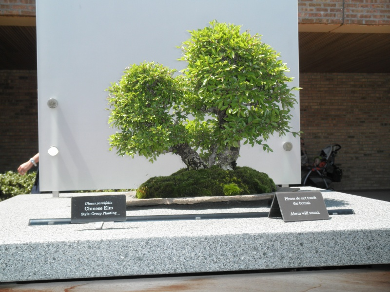 Midwest Bonsai Show 2011 P5220021