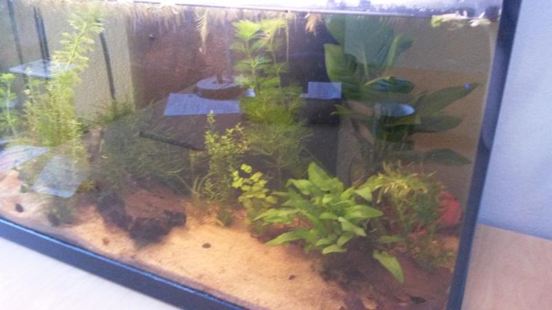 Lancement 60L besoins de conseils pour poissons et matériels - Page 3 Aquari15