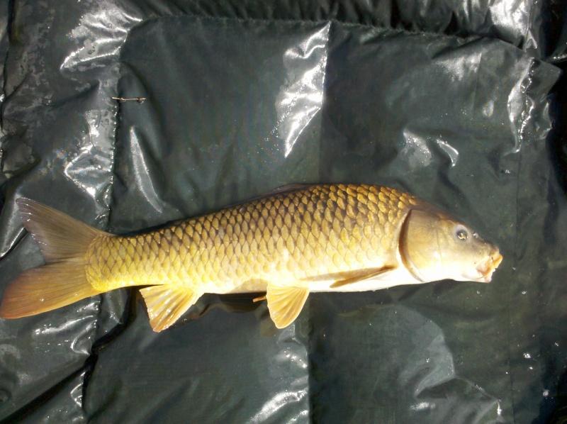 Petite session de 24 h dans un petit étang  2011-010