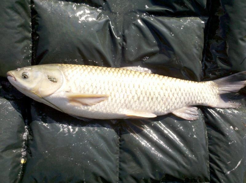 Petite session de 24 h dans un petit étang  2011-011