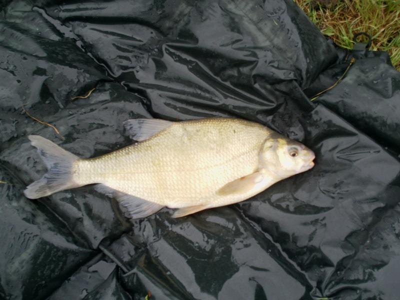Petite session de 24 h dans un petit étang  Imag3914