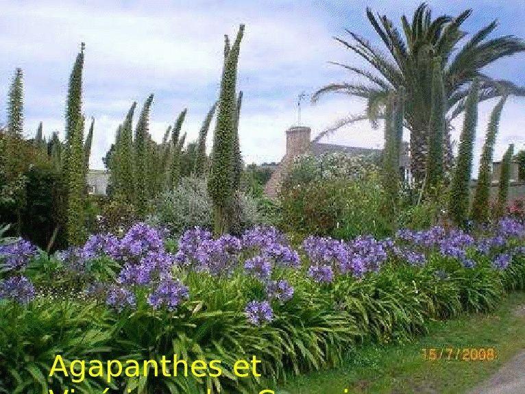 Agapanthe Viewer10