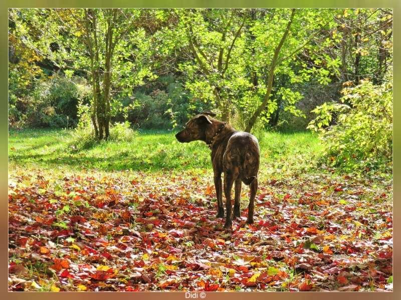 la Mauricie en automne Img_2911