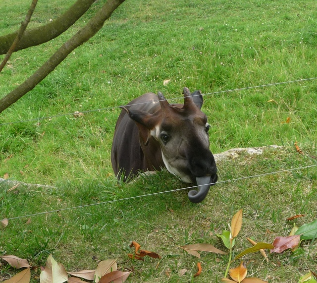 Zoo de Beauval - Page 2 11-07-10